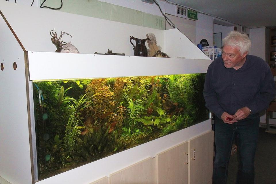 Wolfgang Rau vor seinem perfekten Pflanzenaquarium
