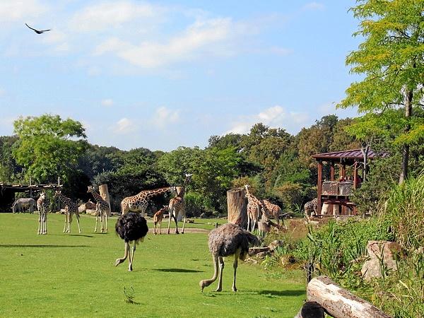 Kiwara-Savanne_Zoo_Leipzig