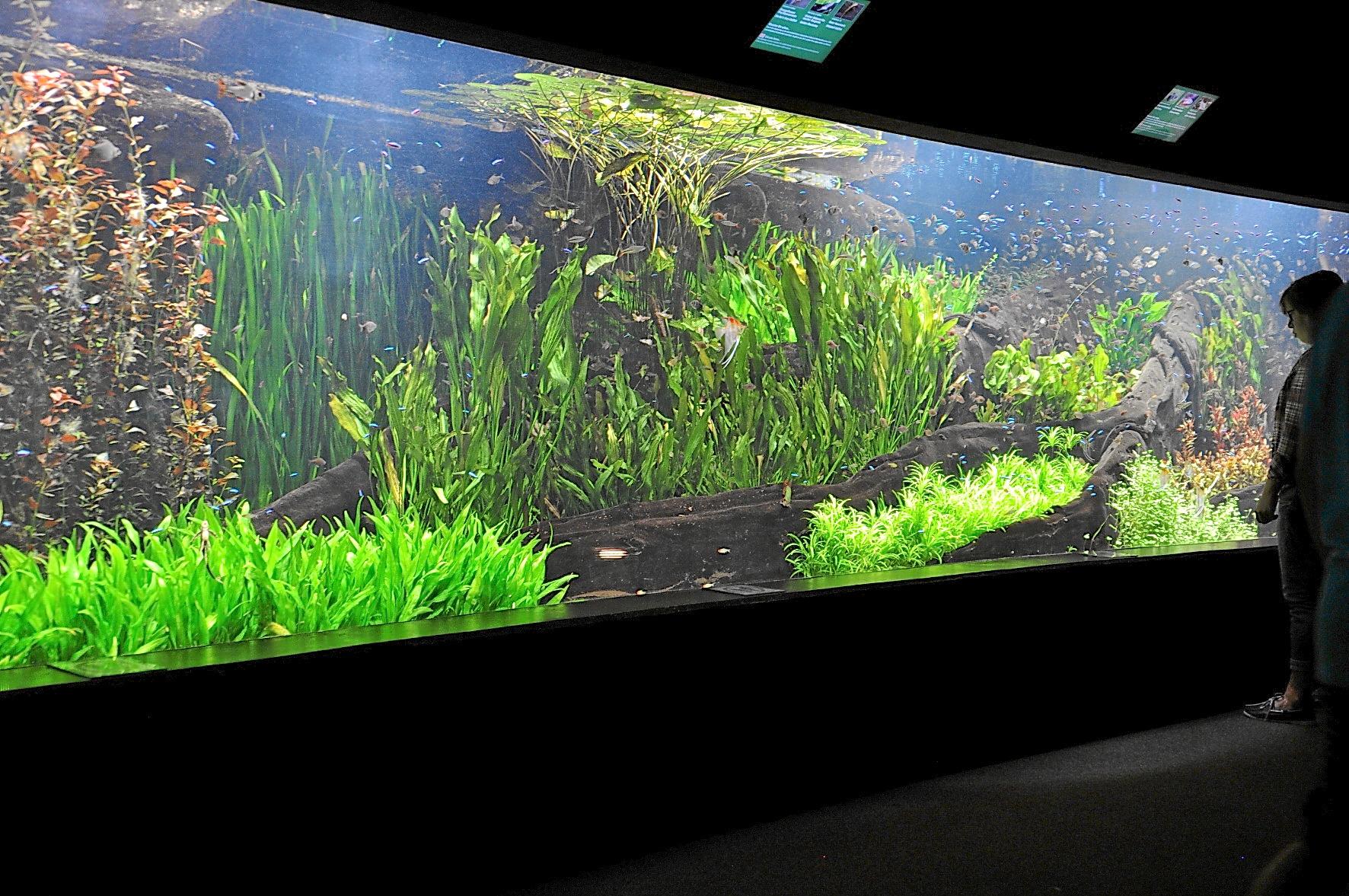 das praechtige bepflanzte suesswasseraquarium amazonas hagenbecks tierpark