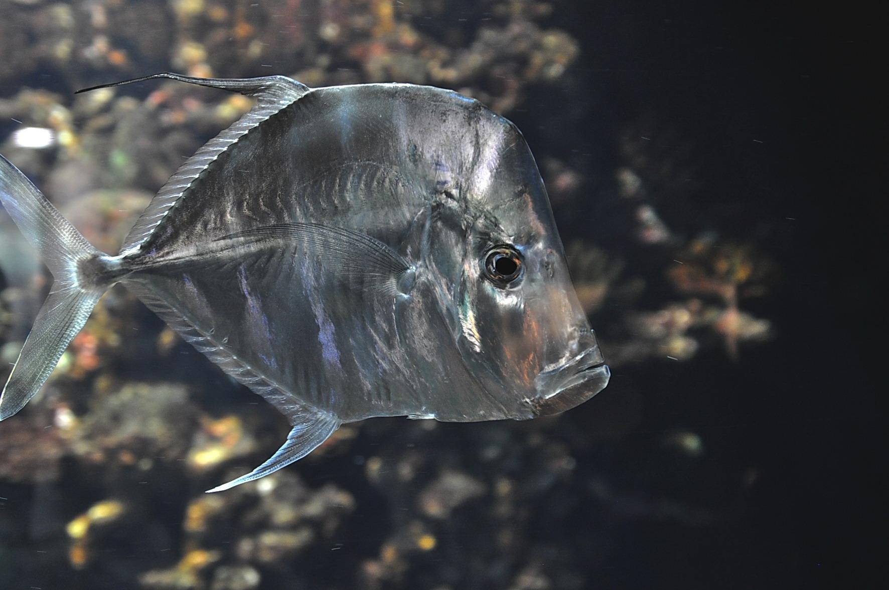 nicht nur fuer suesswasseraquarianer – ein exotischer fisch